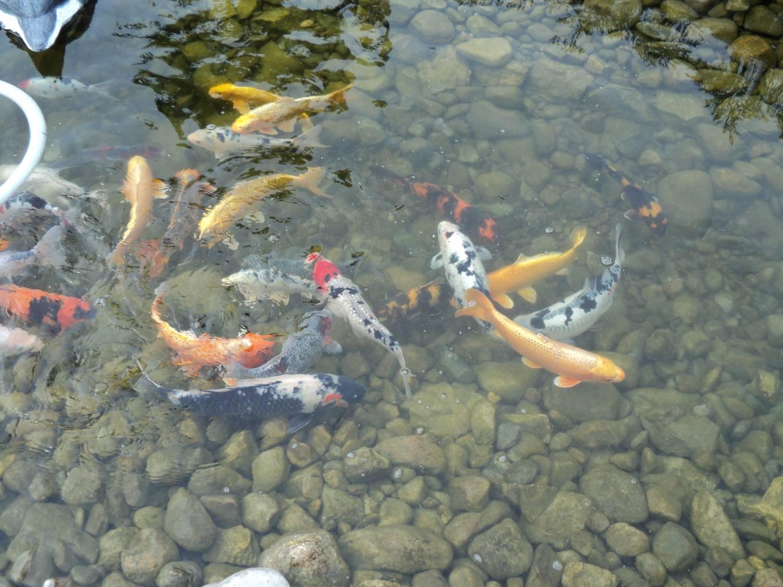 Разведение рыбы - вкусный и доходный бизнес!